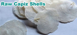Raw of Capiz Shells